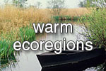 warm_wetlands